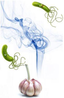 Ajo y úlcera de estómago: Helicobacter huyendo